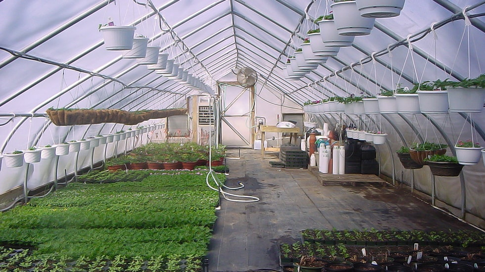 The Benefits of High Tunnel Greenhouses for Commercial