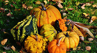 pumpkins and gourds large scale farming